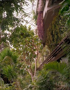 Forgotten Spaces: the Barbican Conservatory Photographs: Luke Hayes Words: Sarah Simpkin