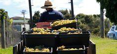 Waiheke Island of Wine - Meet the Vineyards of Waiheke