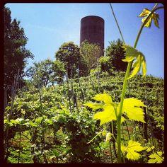 Vineyard and historical tower in Monteu Roero Vineyard, Tower, Italy, Plants, Rook, Italia, Computer Case, Vine Yard, Vineyard Vines