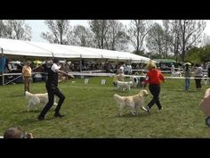 Miskolc MaratonDog Show Dogs, Animals, Animales, Animaux, Doggies, Animal, Pet Dogs, Animais, Dog