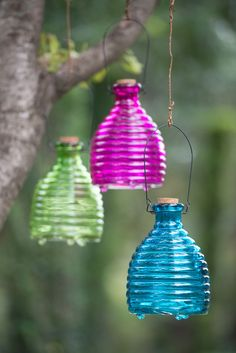 Wasp Trap Takes the Sting Out of Outdoor Fun
