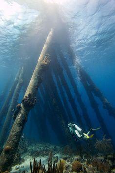Bonaire, Netherlands Antilles...salt piers...best dive ever...if i could i'd dive it every day