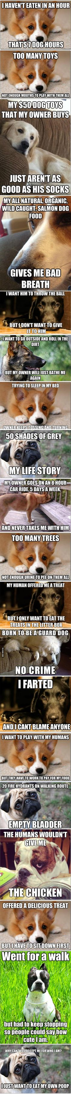 First-World Dog Problems hahahaha