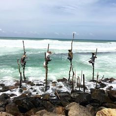 Photo of Sri Lankan stilt fisherman 🎣, men sit perched far from shore atop crude crucifixes of sticks and twine, dangling fishing rods into…
