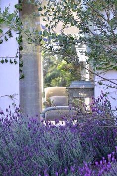 Moment's #LavenderFields