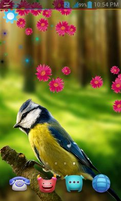 Birds Live Wallpaper 3D: captura de pantalla