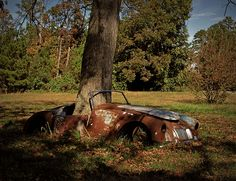 Tree growing through old MG in Edgecombe County, NC.