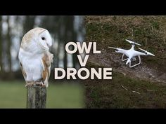 Barn owl vs. DJI drone: Which is the ultimate flyer? - http://eleccafe.com/2016/04/01/barn-owl-vs-dji-drone-which-is-the-ultimate-flyer/