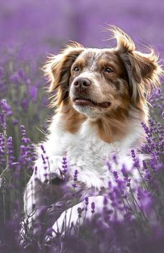 Doggies, Pet Dogs, Dogs And Puppies, Dog Cat, Cute Cats And Dogs, I Love Dogs, Rare Animals, Animals And Pets, Amor Animal