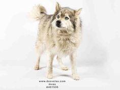 www.PetHarbor.com pet:MRVL.A451535
