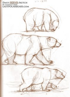 Mama Bear Sketches... would want a black/brown bear instead of a polar bear.
