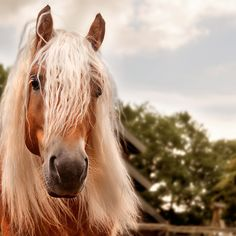 As a horse lover, just looking at this magnificent animal makes me feel peaceful.
