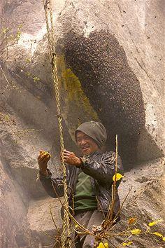 Image: Guru gathering honey (© Eric Tourneret/Caters News)