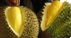 Video: The King of Fruits / Durian stinks so badly that it's banned from hotels and mass transit in parts of Southeast Asia, yet it's regarded by some as a delicacy. Durian Recipe, Filipino Recipes, Filipino Food, Eat To Live, Food N, Edible Garden, Love Letters, Thailand Travel, Natural Wonders