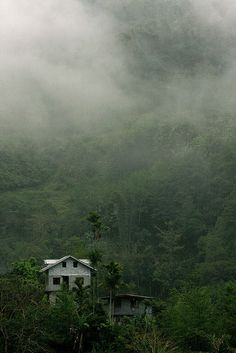 Mist in the trees above two isolated buildings, Banaue