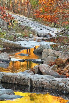 A late autumn scene of fall colors from the surrounding hills reflecting in Pickle Creek at Hawn Sate Park transforming this beautiful Missouri landscape. Beautiful World, Beautiful Images, Autumn Scenes, Autumn Inspiration, Nature Pictures, Amazing Nature, Wisconsin, Michigan, The Great Outdoors