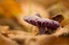 Herfst. Door communitylid StabroekWoman - NG FotoCommunity ©