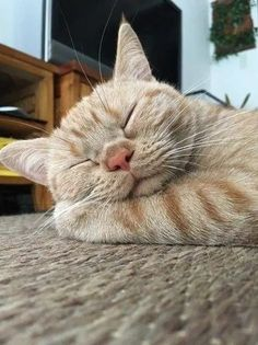 Exceptional Beautiful cats tips are available on our internet site. look at this and you wont be sorry you did. Cute Cats And Kittens, I Love Cats, Crazy Cats, Cool Cats, Kittens Cutest, Pretty Cats, Beautiful Cats, Baby Animals, Cute Animals