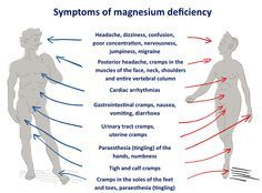Magnesium is a mineral used by every organ in your body, especially your heart, muscles, and kidneys.1 If you suffer from unexplained fatigue or weakness, abnormal heart rhythms or even muscle spasms and eye twitches, low levels of magnesium could be to blame. (adsbygoogle = window.adsbygoogle || []).push({}); If you've...More