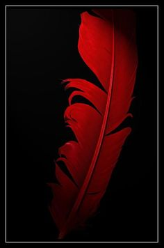 Red feather - my favorite color Colors Of Fire, I See Red, Red Feather, Simply Red, Red Aesthetic, Shades Of Red, Ruby Red, My Favorite Color, Black Backgrounds