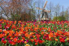 EstiloDF » Keukenhof, el jardín de primavera más hermoso del mundo