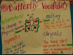 Butterflies and vocabulary