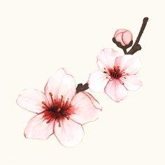 Cherry tree aquarell 19 ideas for 2019 Cherry Blossom Drawing, Cherry Blossom Watercolor, Watercolor Flowers, Blossom Tree Tattoo, Blossom Trees, Tattoo Tree, Cherry Blossom Tattoos, Cherry Blossom Vector, Illustration Blume