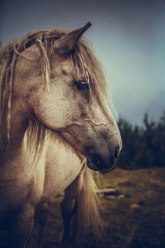 Horse by mirchic on 500px