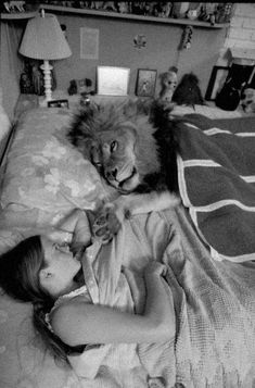 Life Magazine - Tipi Hedren's daughter, Melanie Griffith, in bed with Neil the Lion at the Shambala Preserve, 1970's. Photo by Michael Rougier. Original in colour.