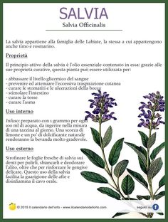 Salvia officinalis Aromatic Herbs, Medicinal Plants, Natural Life, Natural Health, Plants Are Friends, Wellness Fitness, Green Life, Vegan Lifestyle, Health And Wellbeing