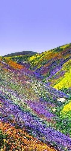 valley of flowers, himalayas tibet