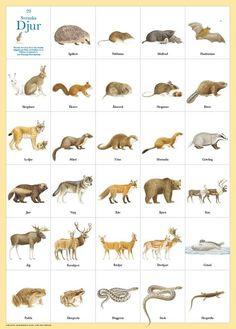 www.naturbokhandeln.se images 2.29101 plansch-29-svenska-djur.jpeg