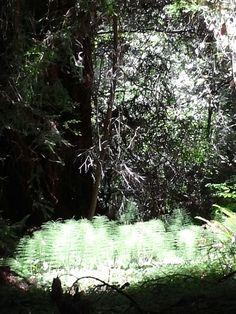 Muir Woods!!