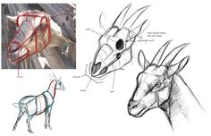 Animal Art and Demos: DEMOS