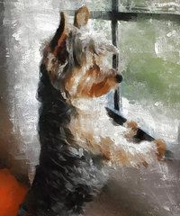 Yorkshire Terrier Art - Yorkshire Terrier Its warm in here but so much more interesting out there by Gael Keevil