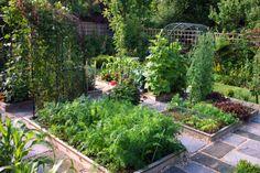vegetable plot