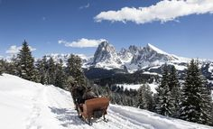 cabinovia alpe di siusi - Cerca con Google