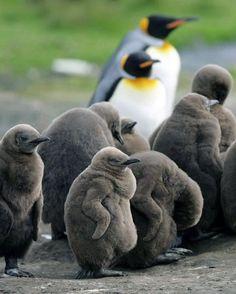 Resultados de la Búsqueda de imágenes de Google de http://yaves.es/images/Animales/bebes-animales/bebes-animalitos-17.jpg
