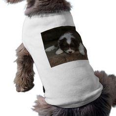 #IcelandicSheepdog_20171201_by_JAMFoto Shirt - #puppy #dog #dogs #pet #pets #cute #doggie #doggieshirt