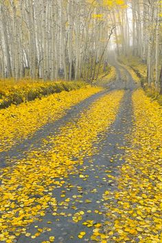 Last Dollar Road (Uncompahgre National Forest near Telluride, Colorado)
