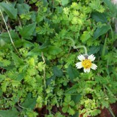 ดอกหญ้า....