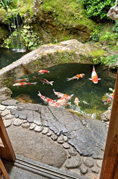 calm koi pond, I like koi, would love to have some sort of pond someday.