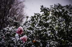 """Let it snow..."" by bampgs #nature #mothernature #travel #traveling #vacation #visiting #trip #holiday #tourism #tourist #photooftheday #amazing #picoftheday"