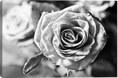 Black and white rose photography  nature macro by PhotoMood, $30.00