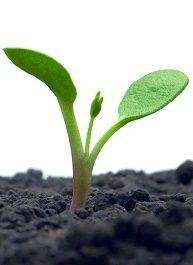 #vivapositivamente Novos rurais e uma ecocasa no Dia da Terra http://www.samshiraishi.com/novos-rurais-e-uma-ecocasa-no-dia-da-terra/