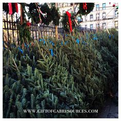 #xmastree shopping #nyc style!  #slp #slpeeps #slplife #slpbloggers #slp2b #speech #speechtherapy #speechpath #speechpathology #speechies #ashaigers #instaslp #schoolslp #slpmom #earlyintervention #xmas #christmas