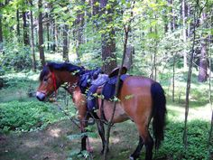 Hnědák v lese u pramene Křinice