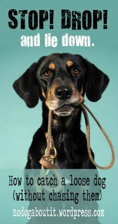 Loose Dog? Don't chase! Tips to get your dog to come to you. Chasing them can actually put them in more danger!