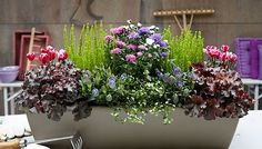 Herbstbepflanzung Balkon - New Ideas Balcony Flower Box, Window Box Flowers, Flower Planters, Flower Boxes, Balcony Plants, Balcony Garden, Fall Flowers, Summer Flowers, Container Plants