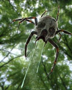 Araña venenosa que en su cuerpo lleva el estigma.